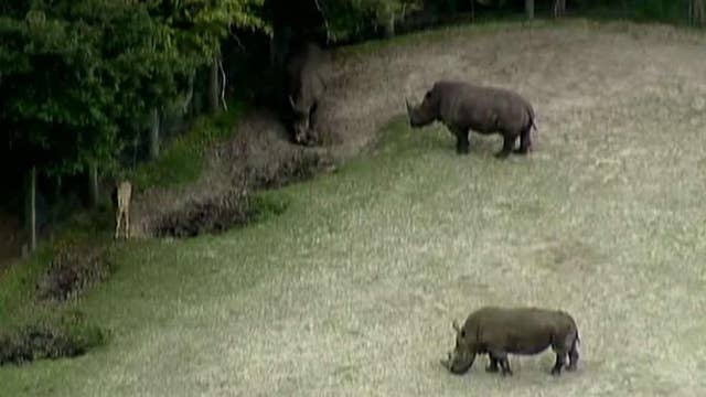 Zookeeper injured after getting struck by rhino's horn