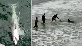 Florida fishermen reel in massive great white shark in rare catch: 'I'm speechless'