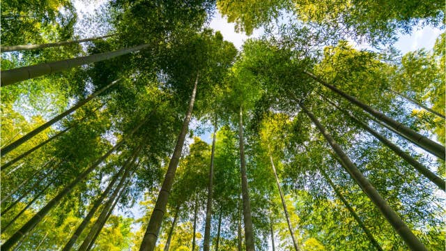 Earth is greener today than it was 20 years ago thanks to 'human activity,' NASA study shows