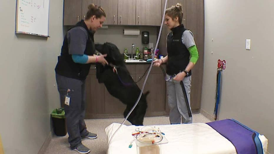 Nationwide dog blood shortage prompts calls for donations