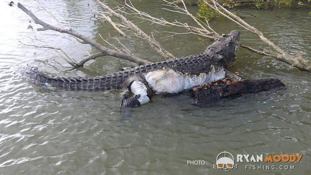 Australian town left devastated after beloved 15ft, 80-year-old crocodile is found dead