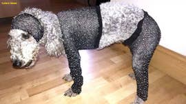 Woman dresses dog in tiny party outfit to highlight fashion sizing discrepancies