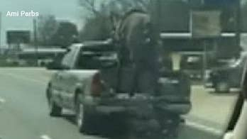 Wild video: Police pull over pickup with horse riding in the bed