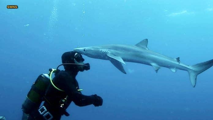Shocking video shows shark 'kissing' diver