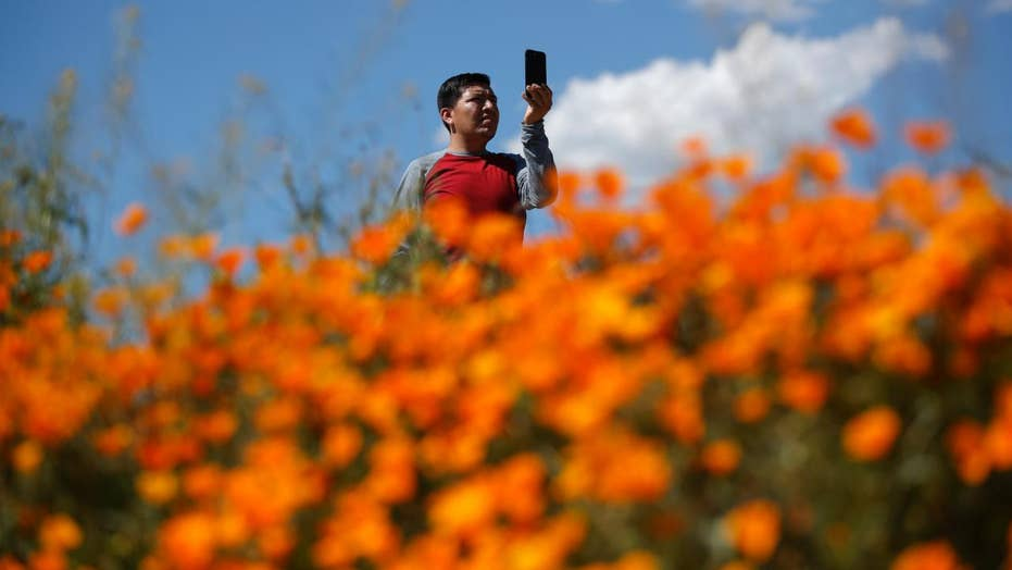 'Super bloom' of flowers force shut down to California's Walker Canyon