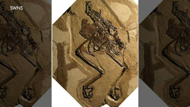 110-year-old bird fossil discovered with egg inside