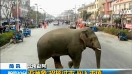 Wild elephant wanders through busy Chinese town