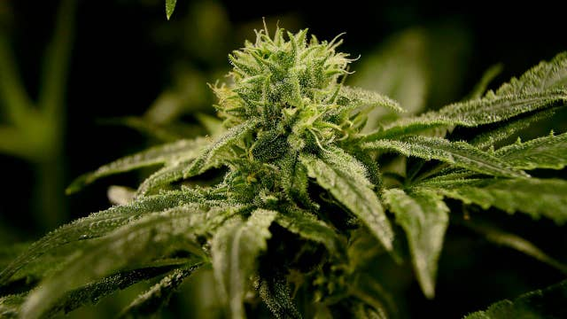 Push to legalize marijuana in New Jersey goes down in flames