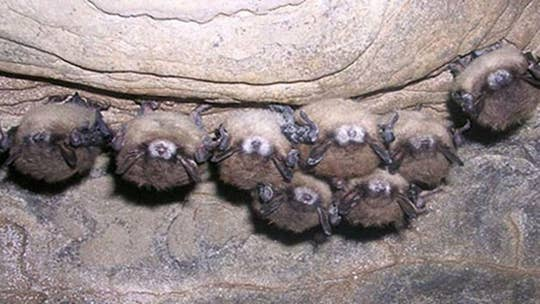 7 strains of coronavirus found in bats in Africa, study finds