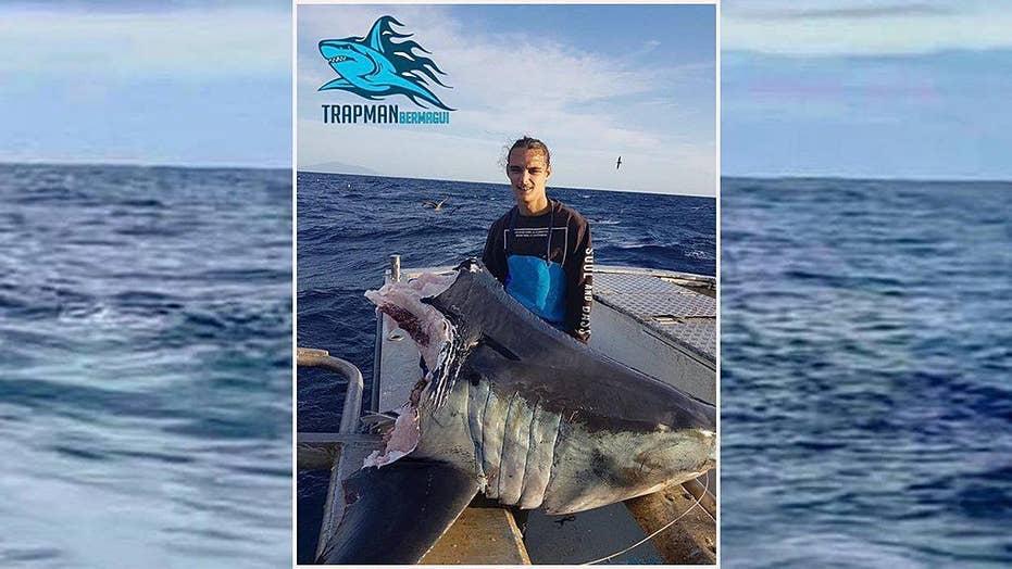 Massive shark discovered with head bitten off in Australia