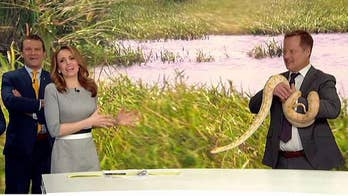 Can Jedediah overcome her fear of snakes?