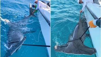 Golf legend Greg Norman reels in a 'monster' hammerhead shark