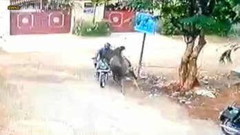 Motorcyclist survives head-on collision with charging bull