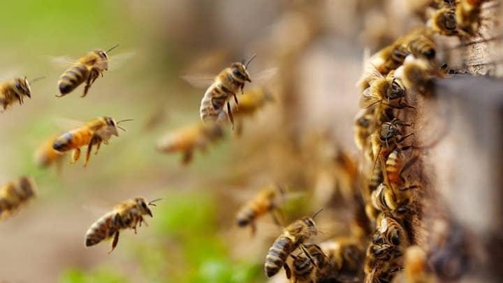 警察: A man was killed at his home after being attacked by a swarm of bees in Arizona