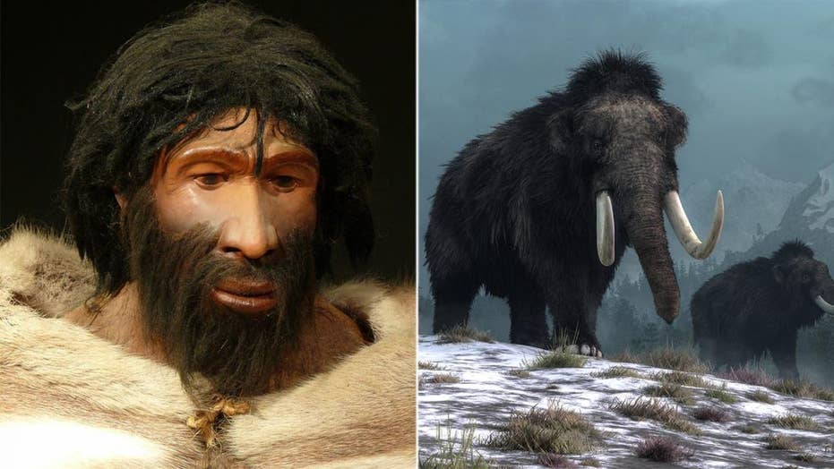 A new study suggests that woolly mammoths and Neanderthals may have shared genetic traits