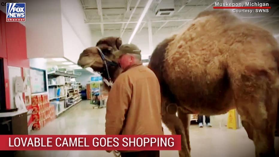 Man takes pet camel for 'shopping expedition' at PetSmart