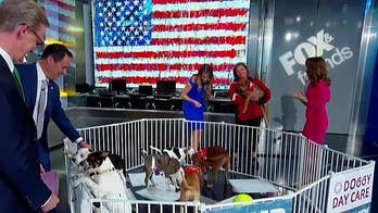 'Fox & Friends' destresses on Tax Day with a trip to the gym and puppies