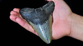 North Carolina girl finds megalodon shark tooth buried on beach: 'Is this a dream?'