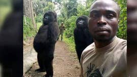 'Cheeky' gorillas pose for stunning selfie with rangers