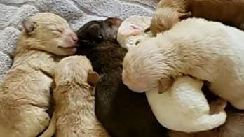 Raw video: California woman caught on camera dumping newborn puppies next to a dumpster