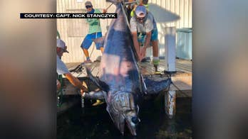 Catch of a lifetime: Fisherman hooks nearly 760-pound swordfish
