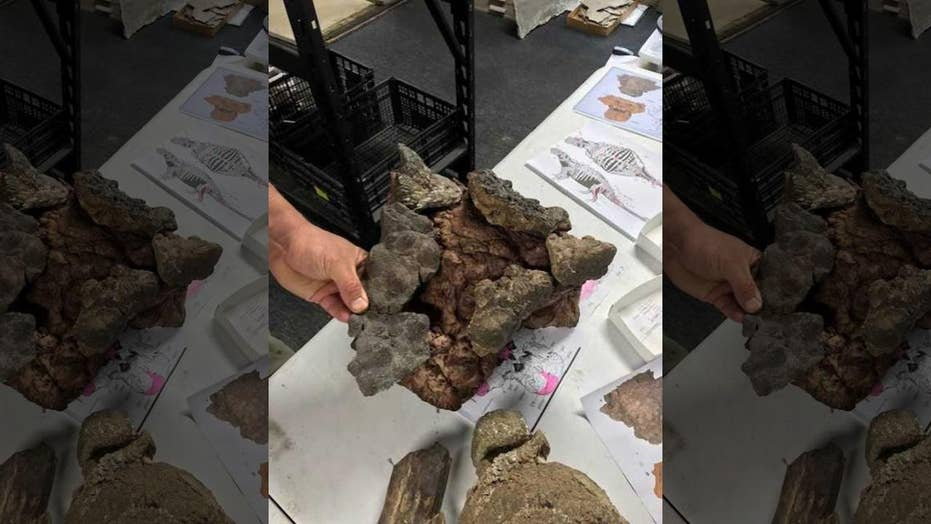 New spike-armored dinosaur found in Texas