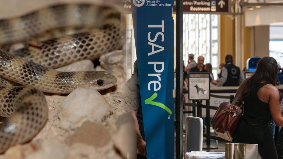 The craziest things confiscated by the TSA