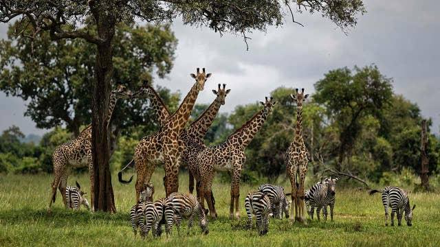 UN report warns 1 million living species face extinction