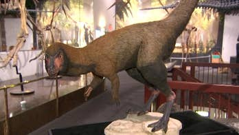 Scientists identify smaller cousin of 9-ton Tyrannosaurus rex