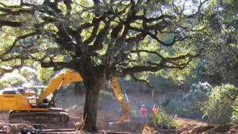 California judge orders couple to pay nearly $600,000 for removing a 180-year old oak tree