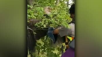 Injured bald eagle rescued from floodwaters after becoming trapped