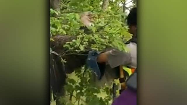 World Bird Sanctuary rehab team rescues injured bald eagle