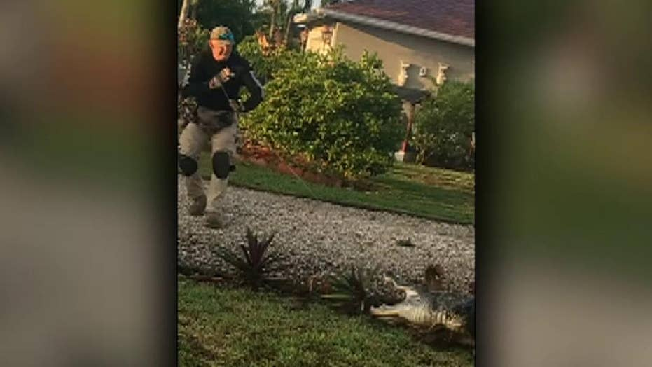 Raw video: Alligator wrangled by police officers next to school bus stop