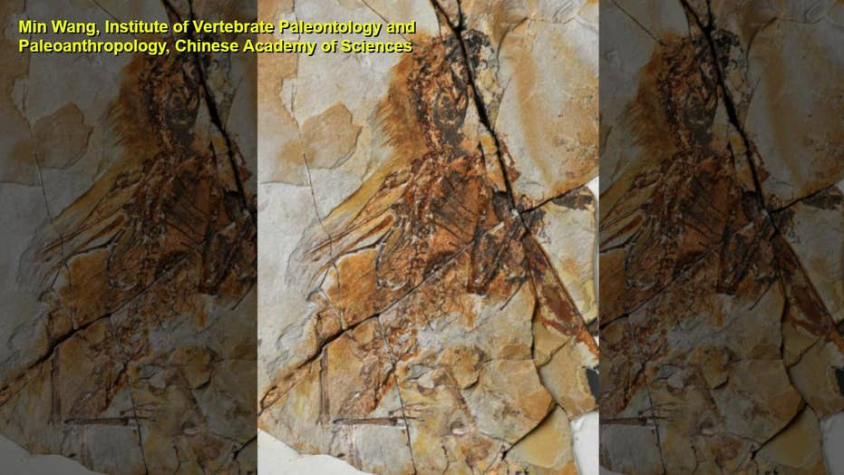 Bat-winged dinosaur discovered in China
