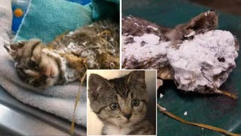 Kitten found encased in spray foam and trapped in garbage can