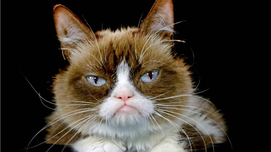 Internet sensation Grumpy Cat, 7, dead after 'complications' from infection