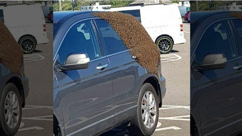 Shoppers flee bees swarming parked cars as beekeeper saves the day