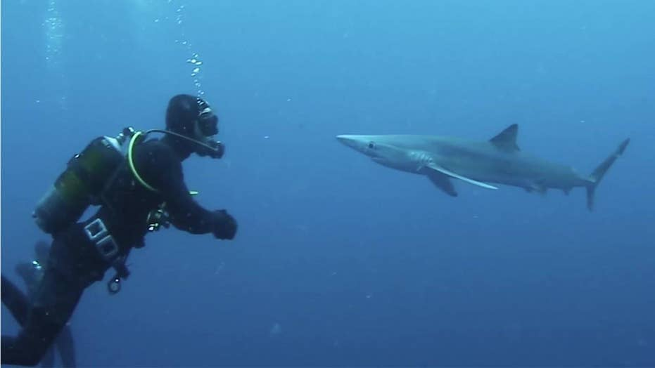 Shark! Wild video of first-hand shark encounters