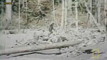 The U.S. states with the most frequent Bigfoot sightings