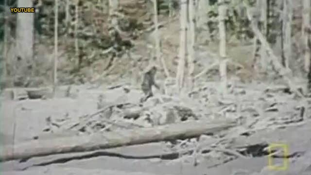 The US states with the most frequent Bigfoot sightings