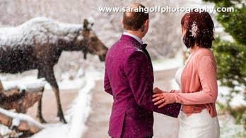 Moose crashes wedding in Rocky Mountain National Park