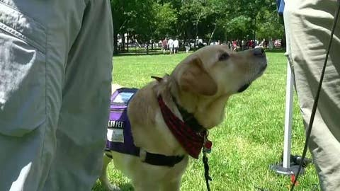 Paws for Purple Hearts use service dogs to help vets