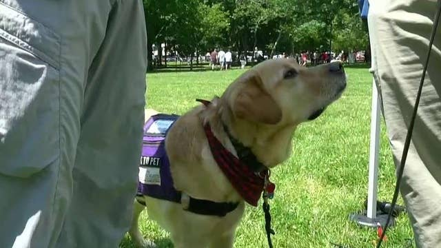 Paws for Purple Hearts use service dogs to help veterans