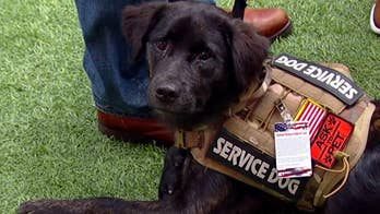 How veterans and their animal companions are saving each other