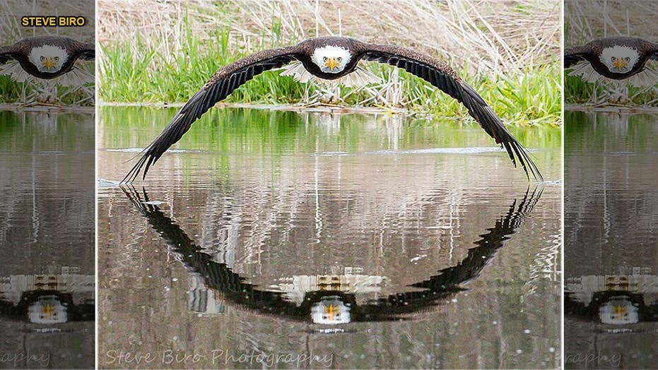 Stunning bald eagle photo becomes viral sensation