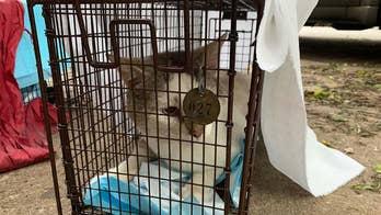 Philadelphia's cat crisis hits new peaks with nearly half a million strays
