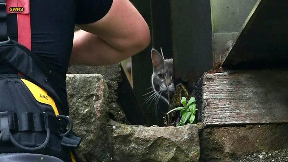 Trapped cat wanders home after failed $7,500 rescue mission