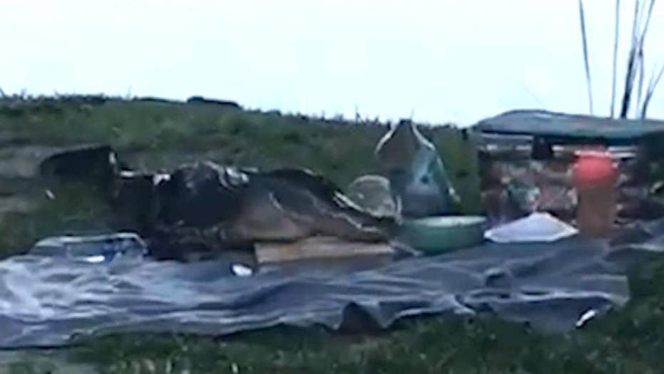 Gator crashes couple's romantic picnic in Florida