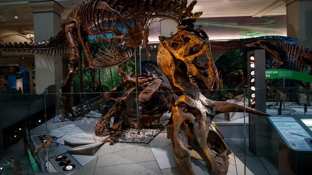 Inside the Smithsonian National Museum of Natural History's newly renovated dinosaur hall