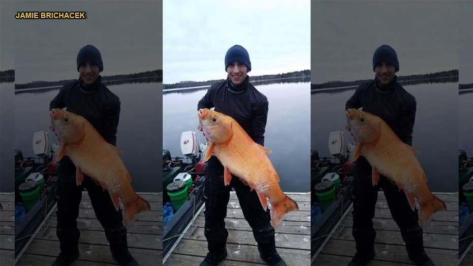 Biologist identifies fisherman's catch as rare, orange and possibly 110-year-old buffalofish